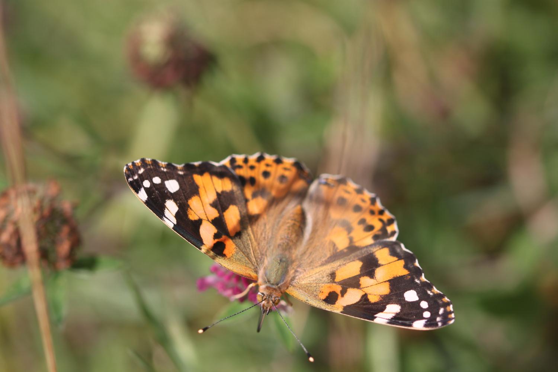 butterflies 20.jpg
