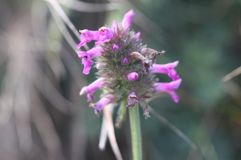 wildflowers 17.jpg