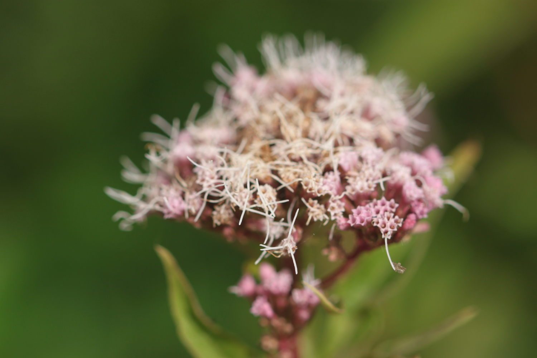 wildflowers 21.jpg