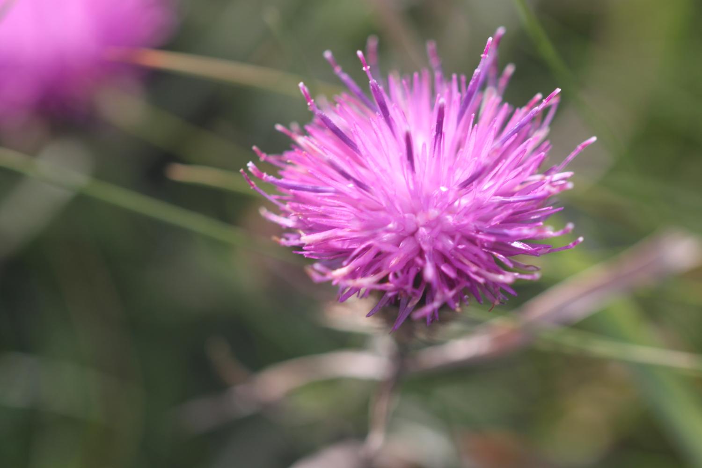 wildflowers 34.jpg