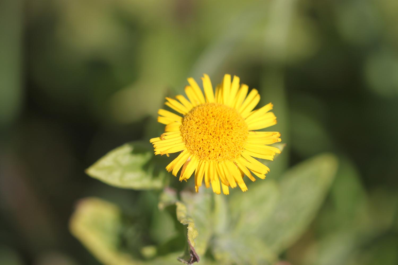 wildflowers 24.jpg