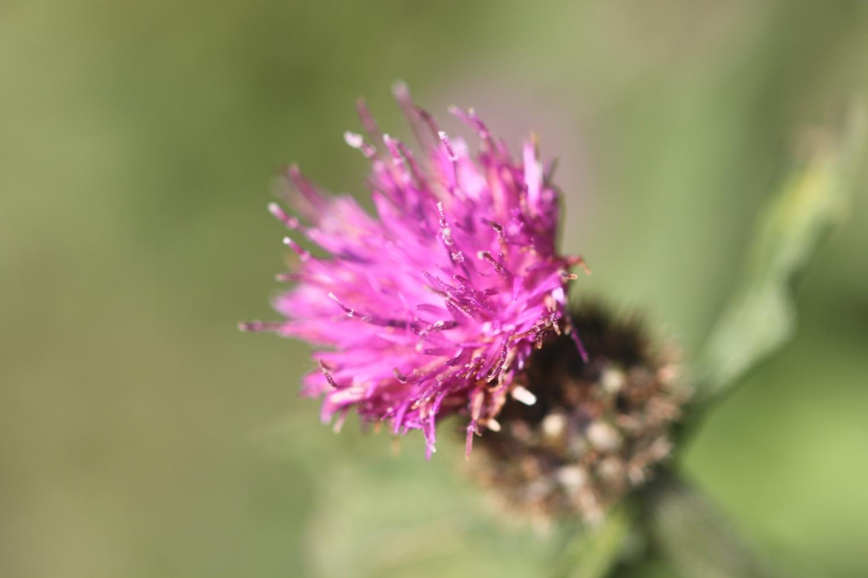 wildflowers 28.jpg