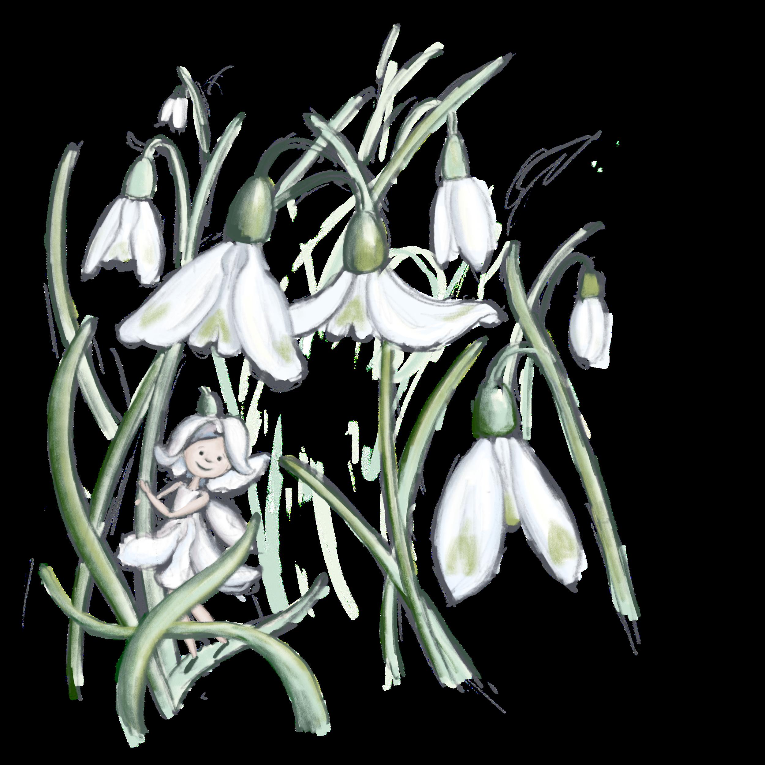 The Snowdrop Fairy -