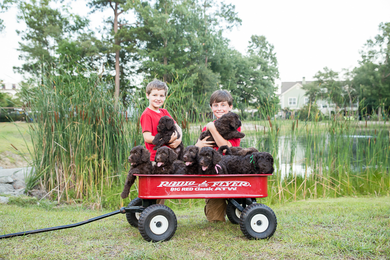 wagon and puppies