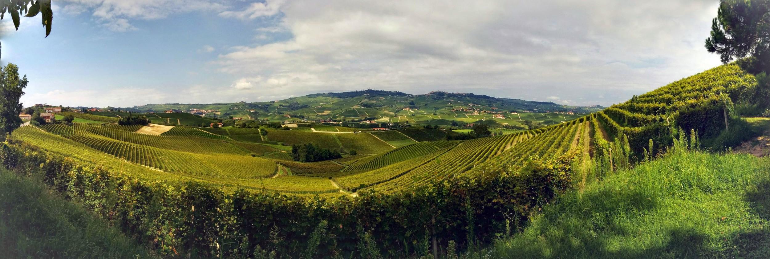 Castiglione Falletto (CN): La Morra in the distance