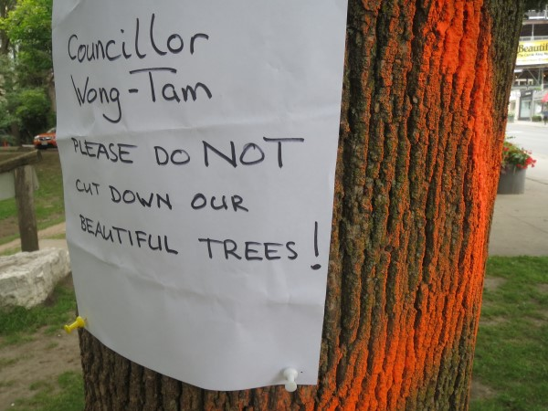 Tam-Wong trees ramsden park (600 x 450).jpg
