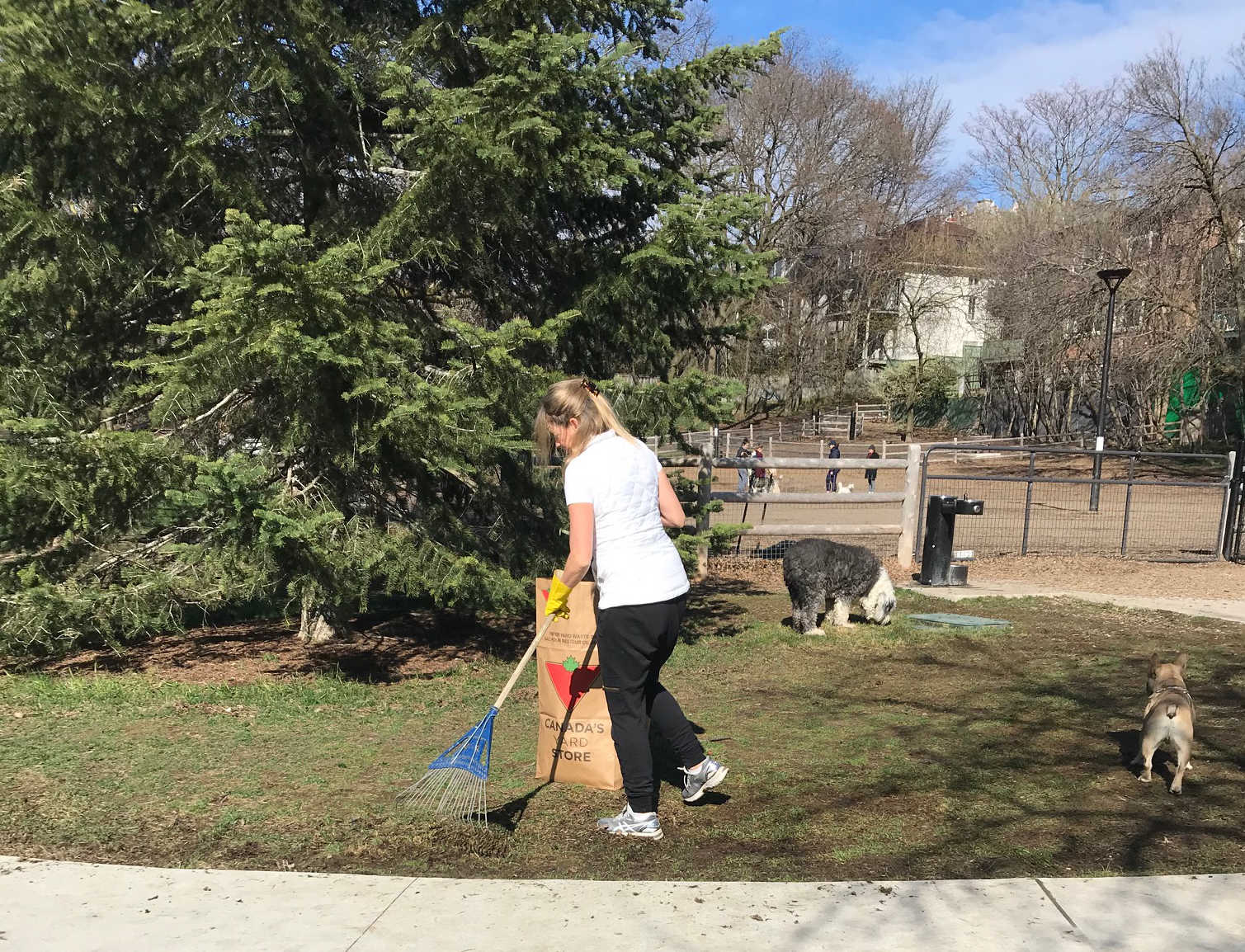 dog park clean up person.jpg