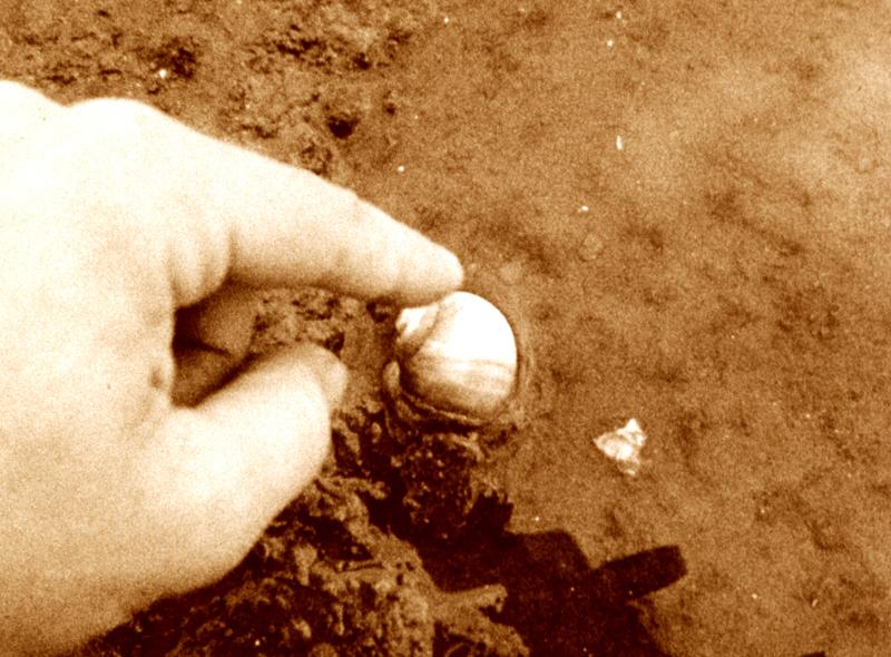 Still from Beach Events  (Rick Hancox, 16mm film).