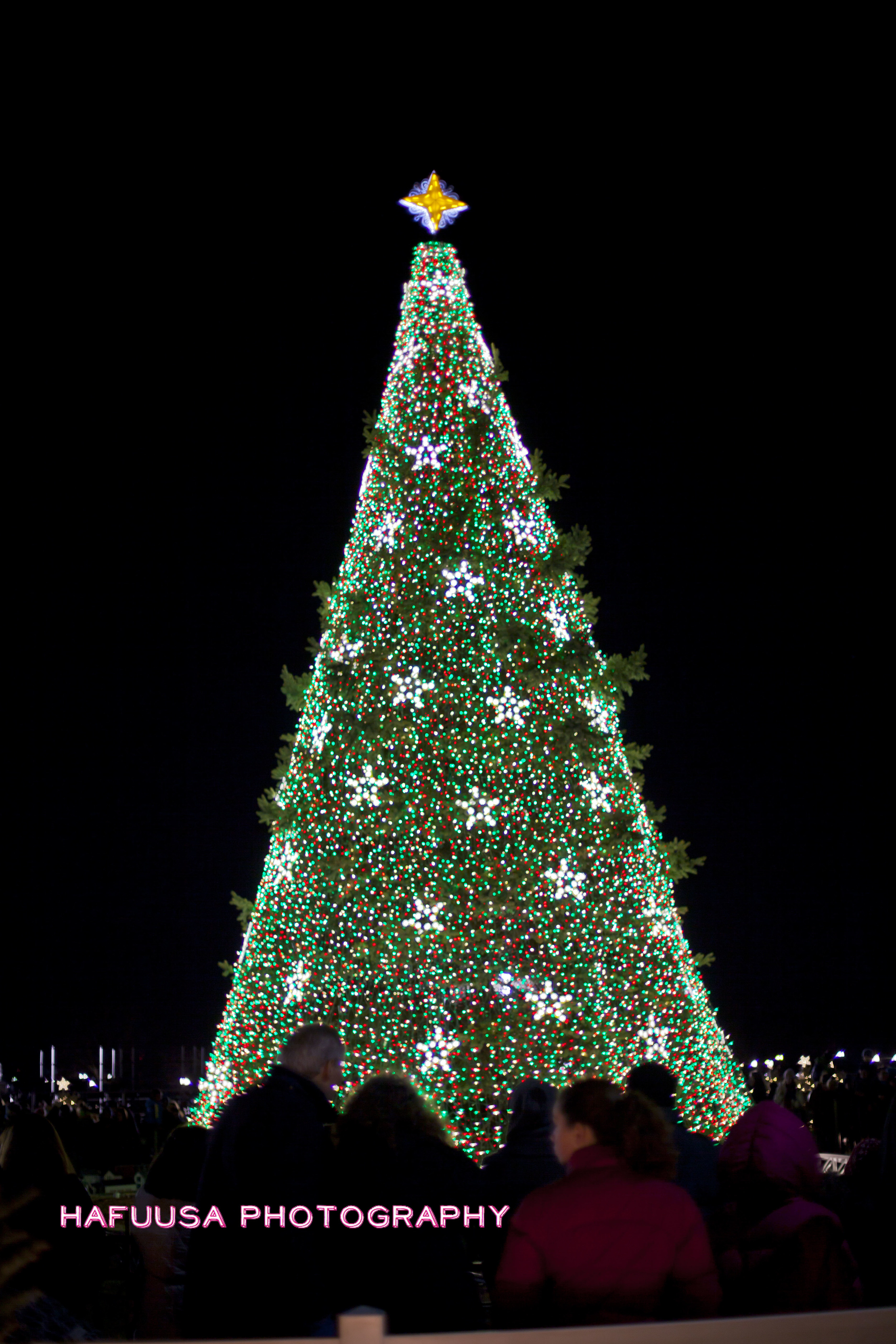 National Christmas Tree.jpg