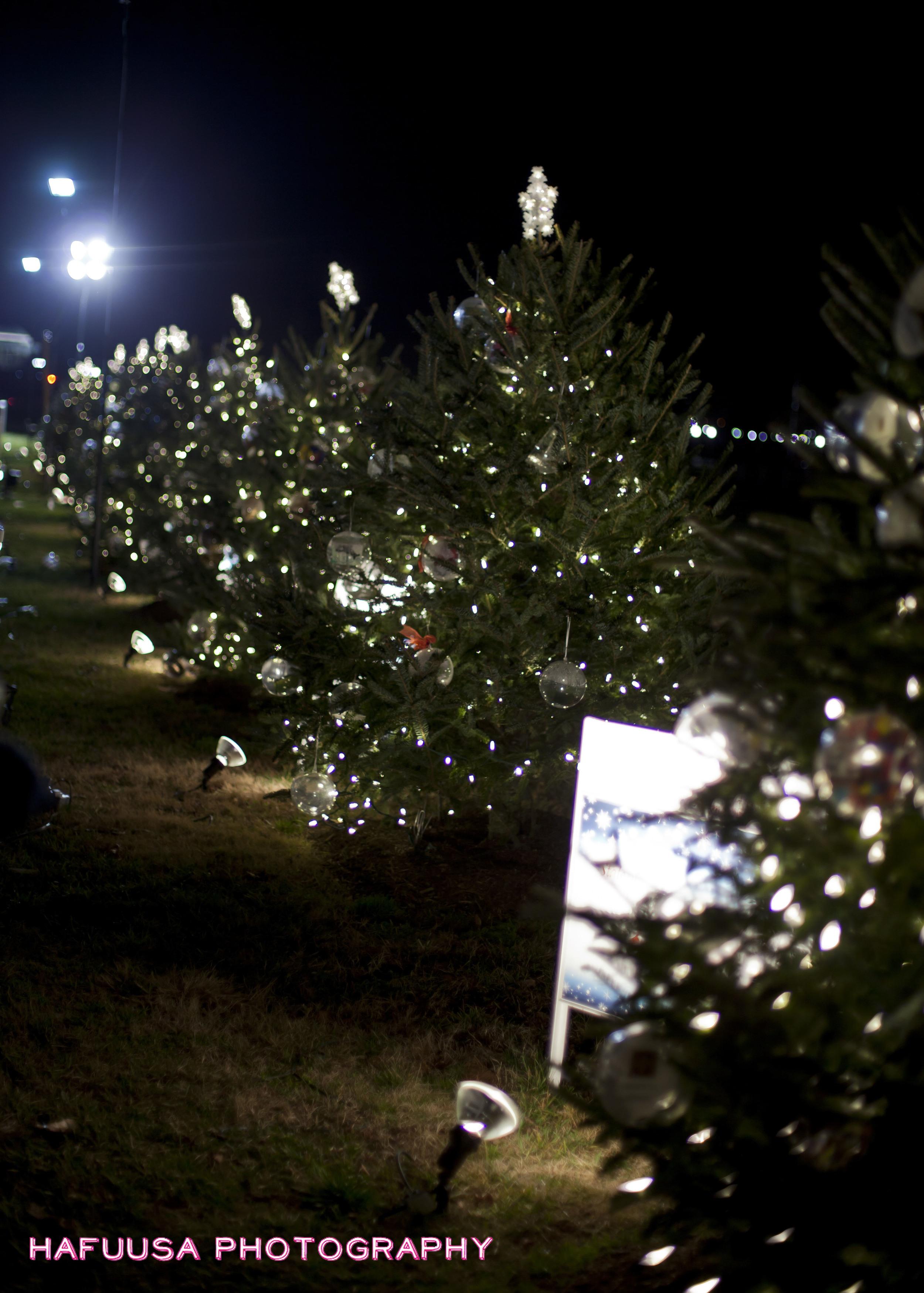 50 States Christmas Trees.jpg