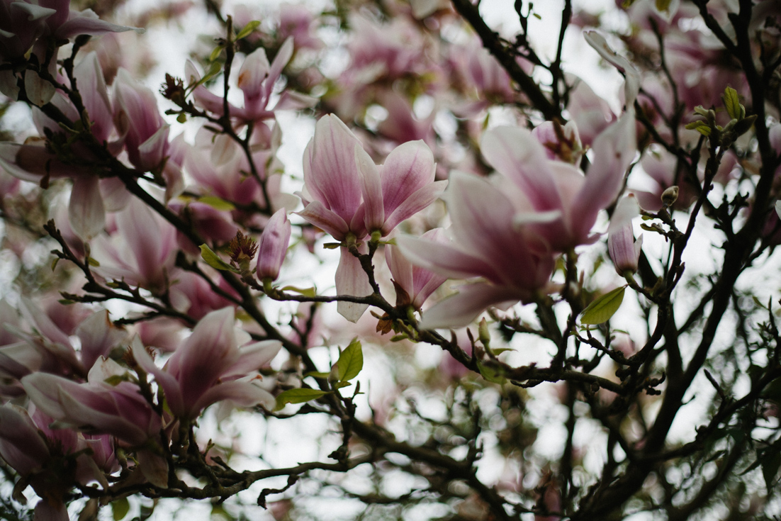 Beautiful magnolia photos on www.houseofsmilla.com/blog/change