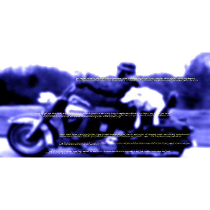 For Kudzu: Harleys and White German Shepherds, Single Page Found