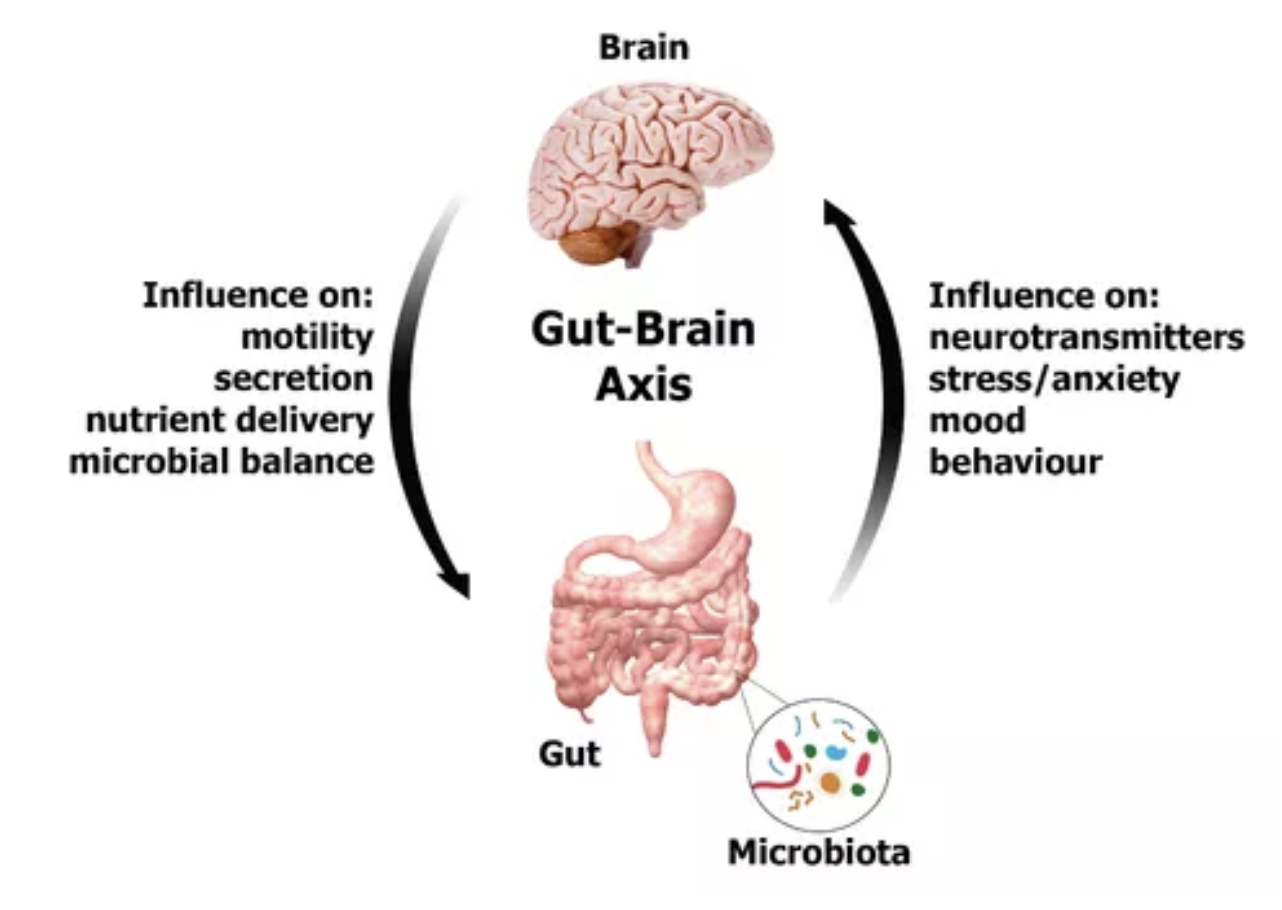 Example of the gut-brain axis.