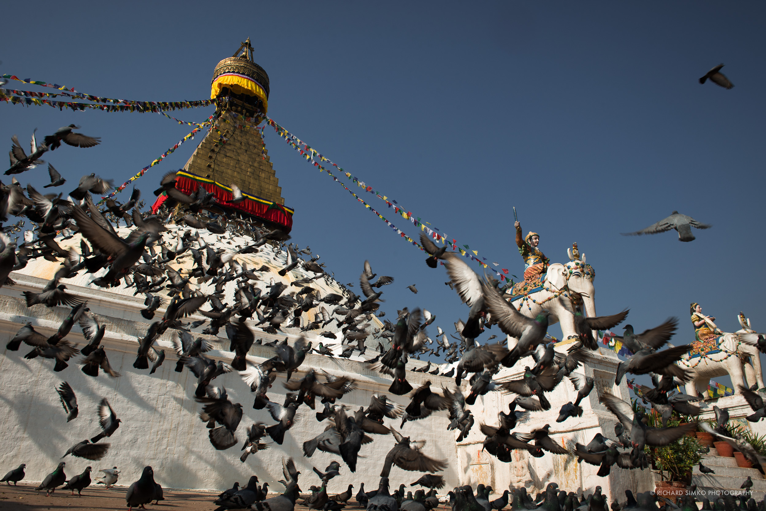 Boudhanat is biggest Buddhist stupa in Asia and also a home to thousands of pigeons.