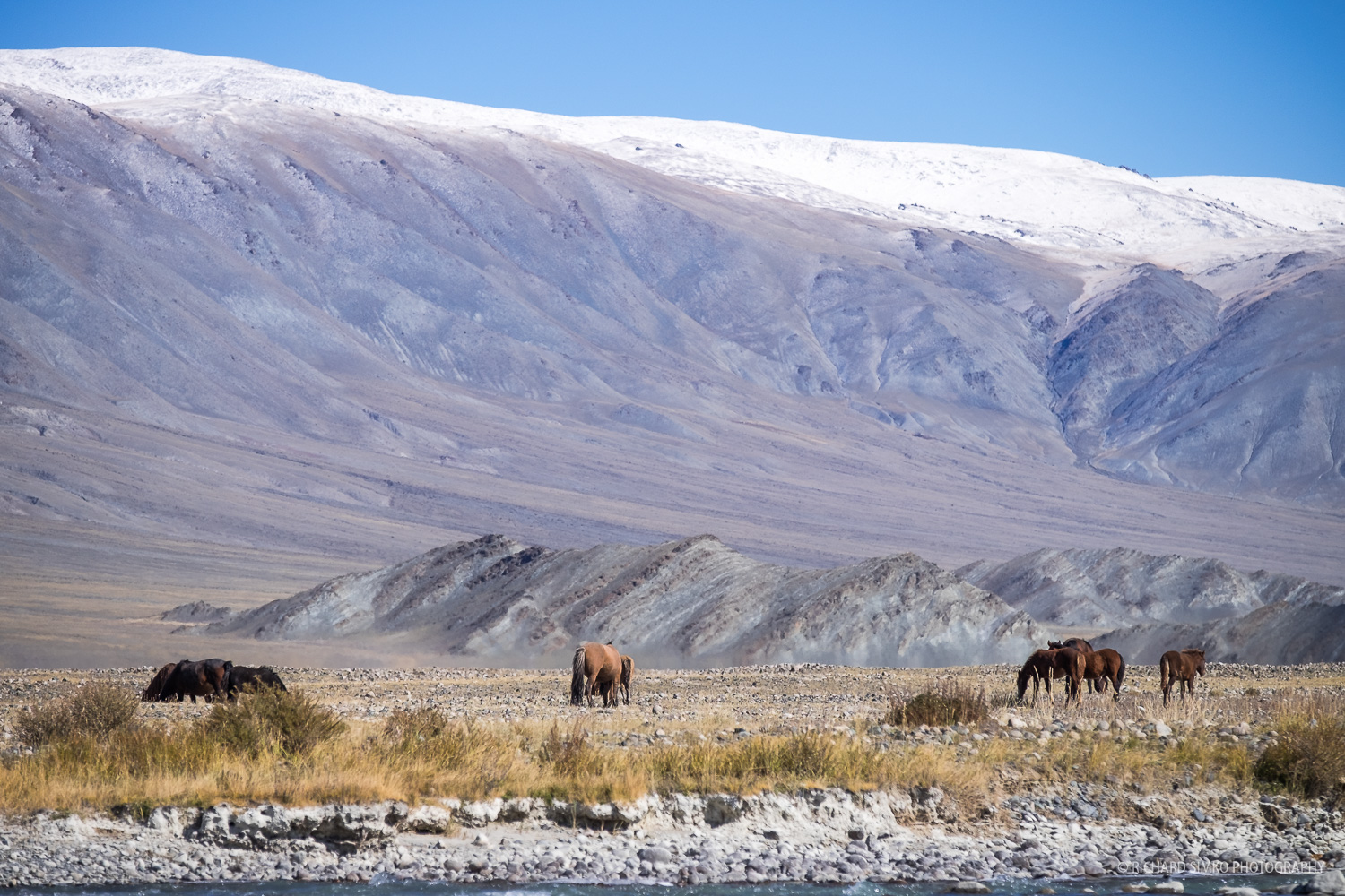 Vistas in Mongolia are beautiful, vast and roll of live stock like sheeps, goats, camels, cows or horses