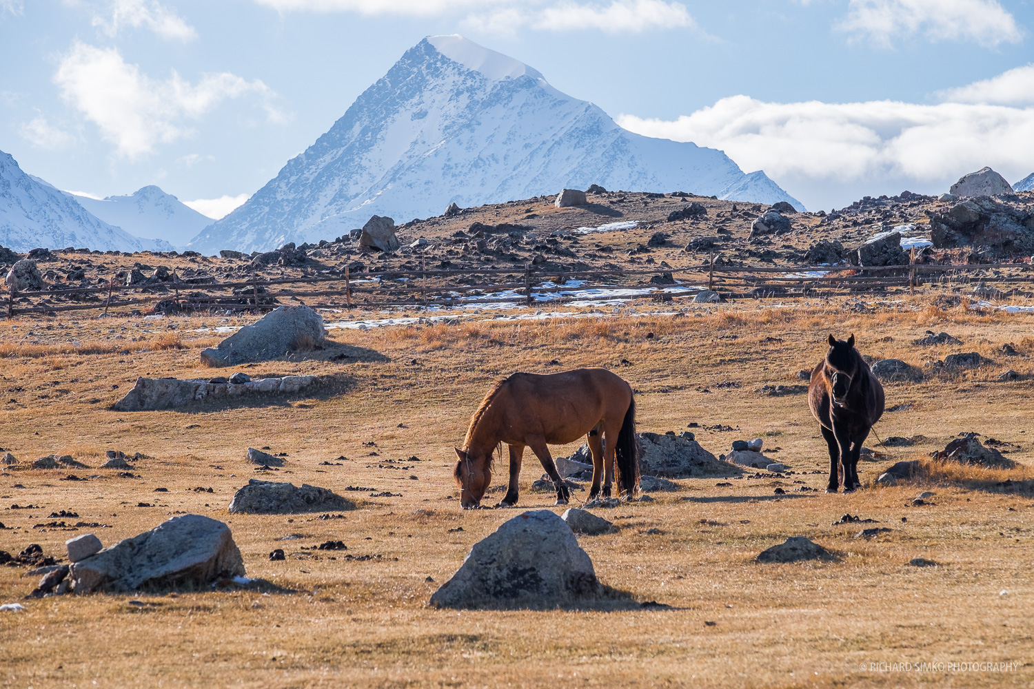 Horsed feeding on dry yellow grass around the camp under the watchful sight of mighty Khuiten peak.