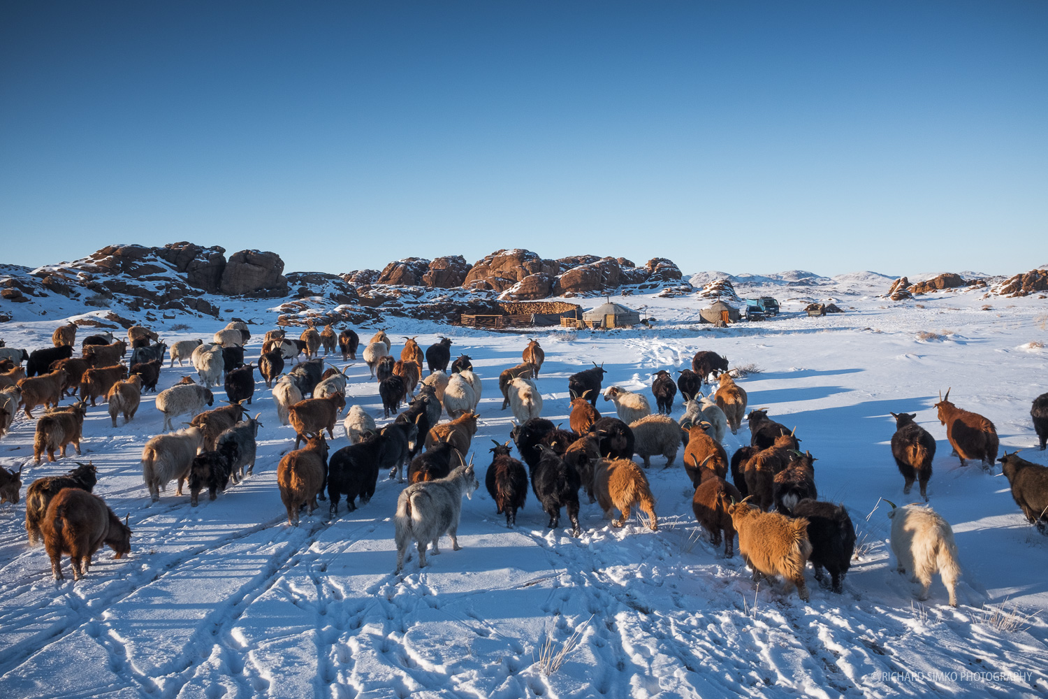 I am herding the goat and sheep back to camp. It fun, it's good for health and I can take photographs like this one.