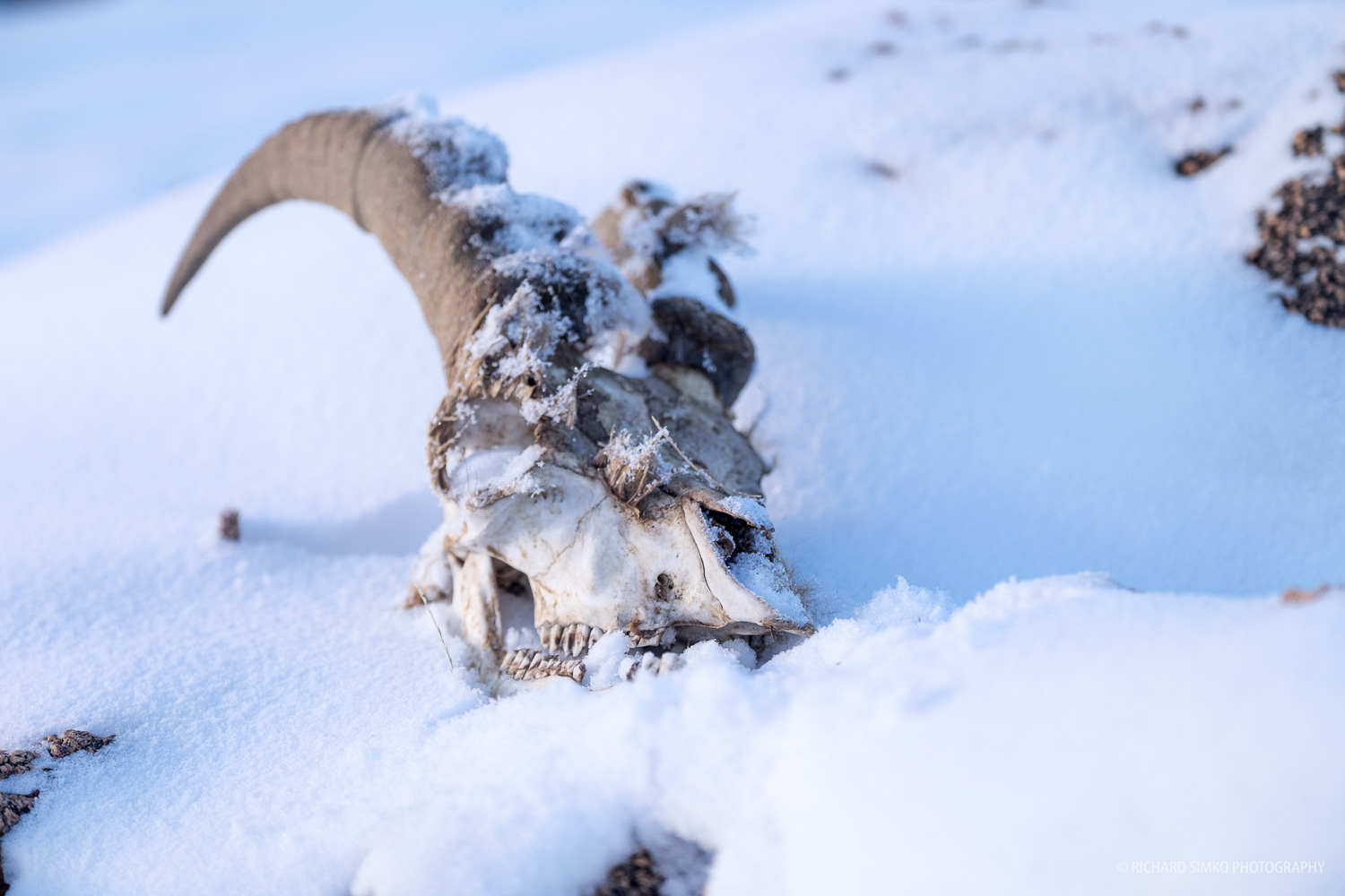Bones, skulls or entire skeletons are quite common in the step. Livestock often falls victim to wolves, harsh terrain or weather.
