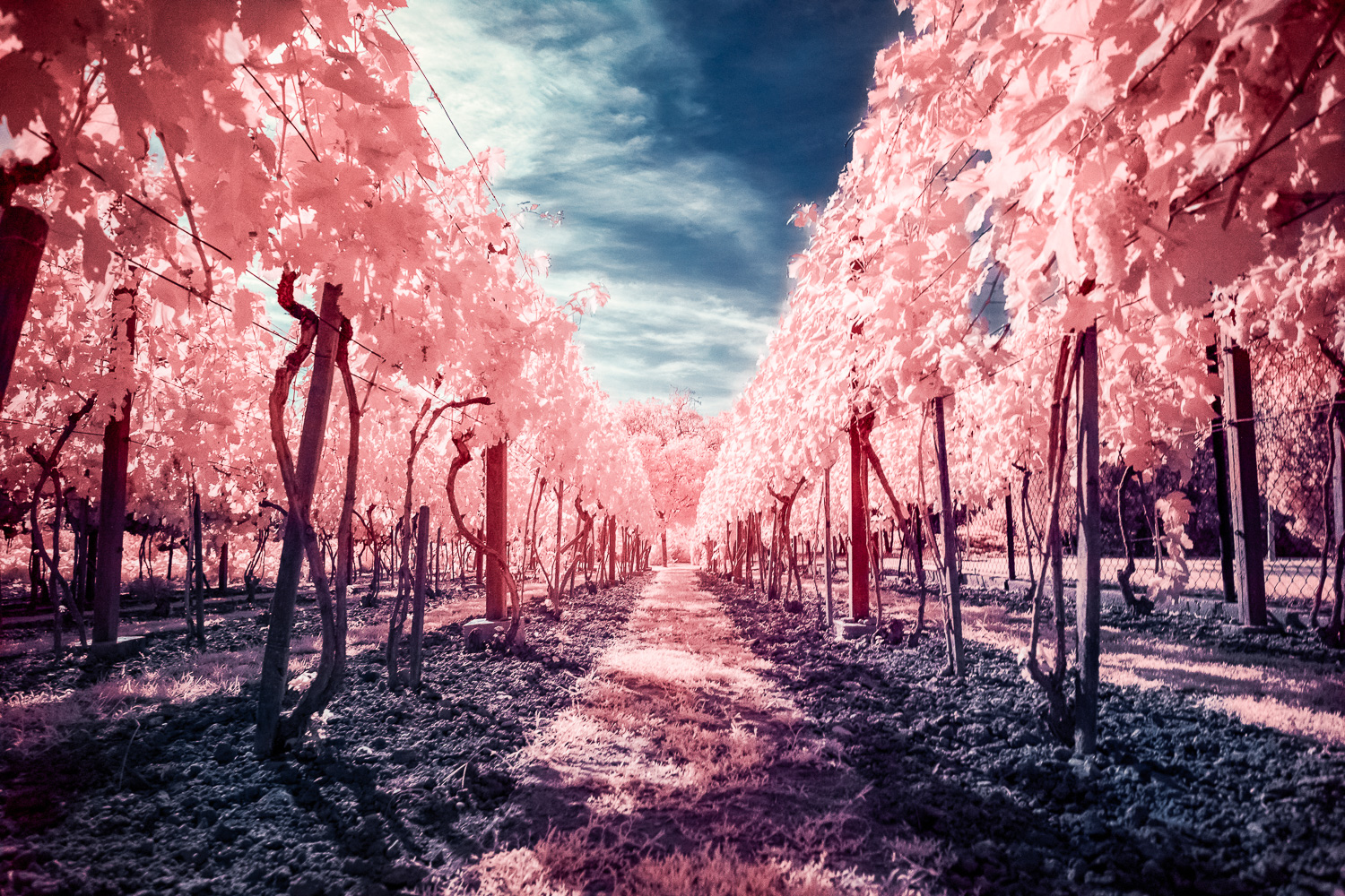 The infrared photography is a great way how to shoot mid-day During the hot summer days