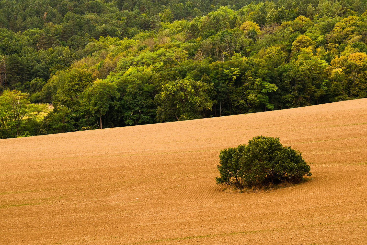"Color contrast.I noticed while shooting the previous photograph. I saw an opportunity for this kind of shot. O wished for a patch of yellow field among the trees. It would create a perfect ""ying and yang"" composition"