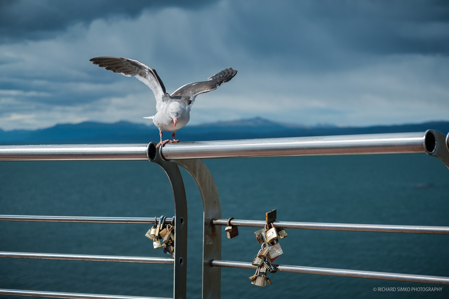 There is lot's of wildlife, especially birds near the bay.