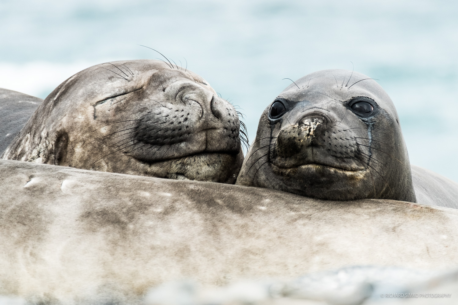 We came across these two Elephant seal babies snoozing on the beach.