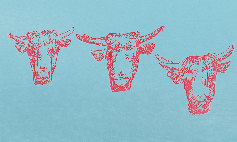 doodle cows3.jpg