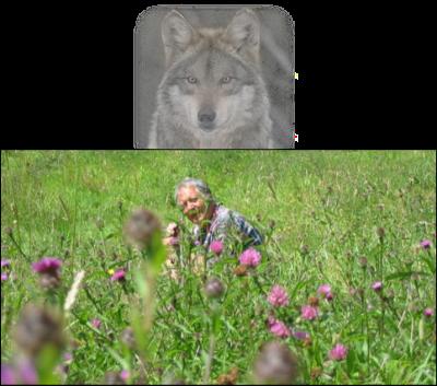 Joans meadow (3).jpg