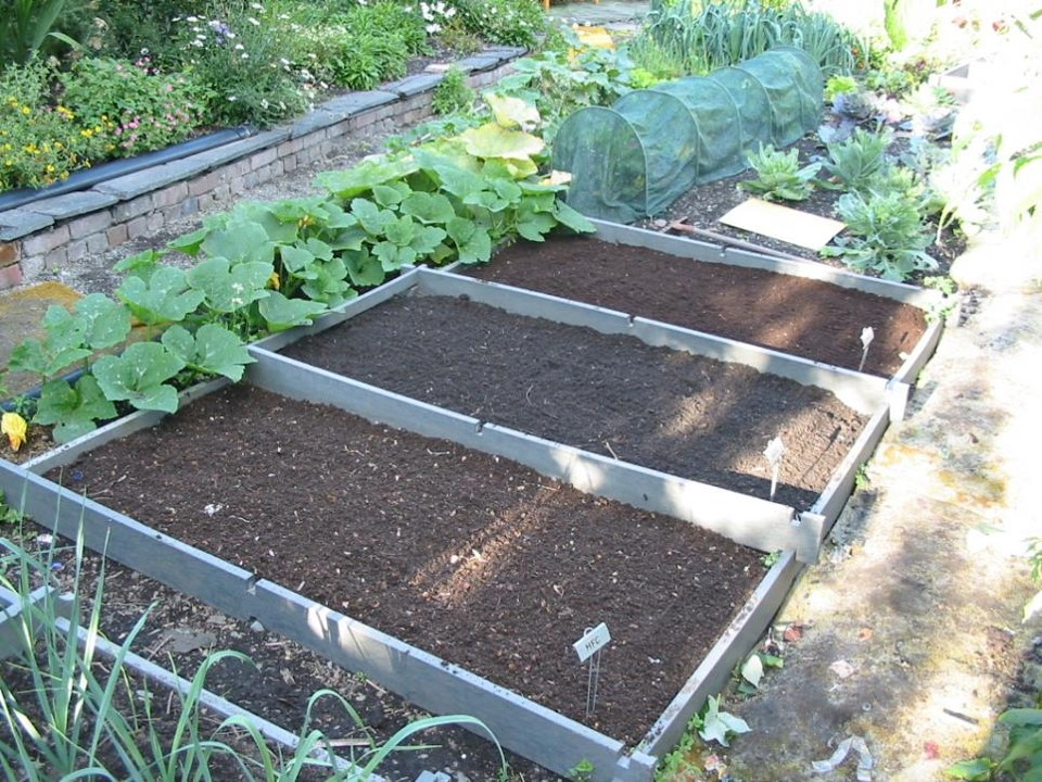This is a system I used to compare the qualities of different composts. Each bed has a different compost, and I would simply plant rows across all three beds and observe (and measure) the results.
