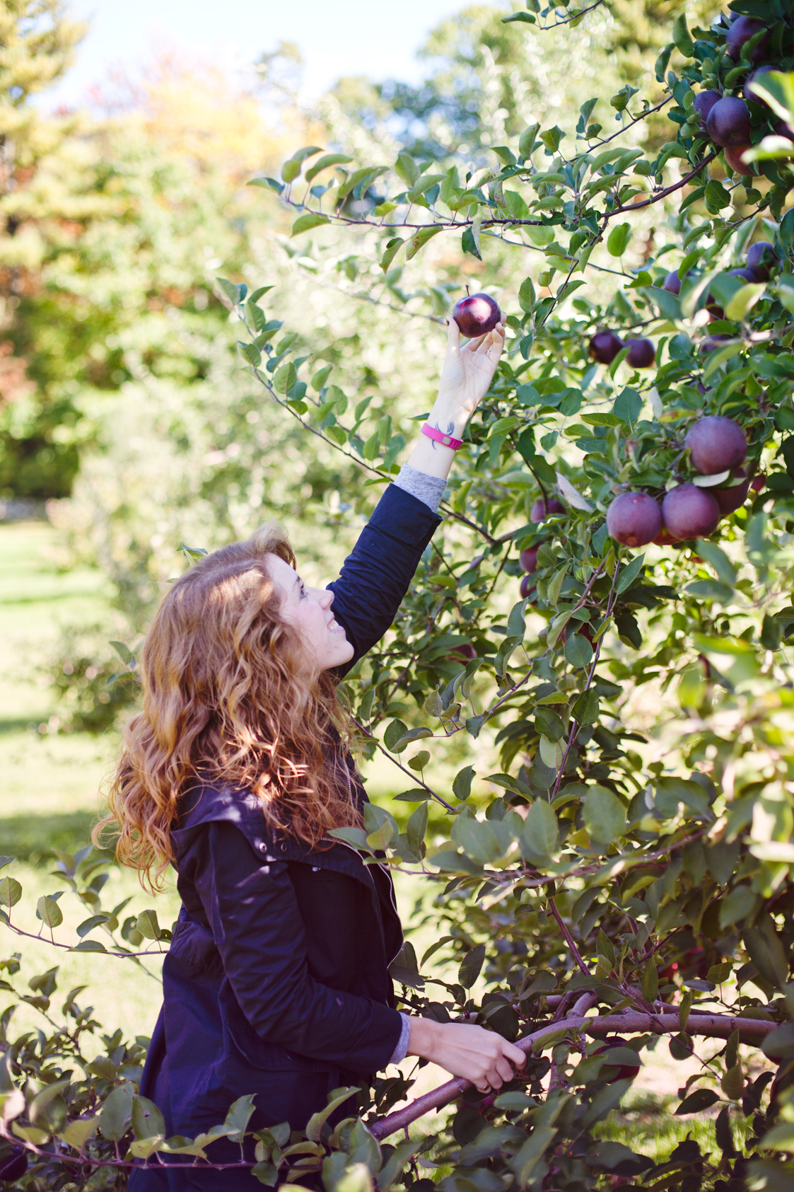 ApplePicking-03.jpg