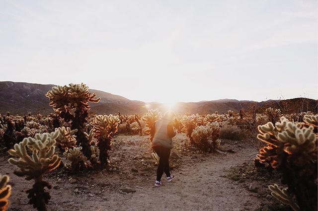 rock hunting at sunset for the perfect souvenir 🌵☀️✌🏻 • • • • • #aquietstyle #mytinyatlas #thatsdarling #darlingweekend #ABMtravelbug #suitcasetravels #tlpicks #dametraveler #liveauthentic #flashesofdelight #seekthesimplicity #momentsofmine #lovelysquares #pursuepretty #thehappynow #joshuatree #desertvibes #mydomainetravels #ilovejoshuatree #joshuatreenp #themoderndayexplorer #staywander #desertmag #visitcalifornia #TellOn