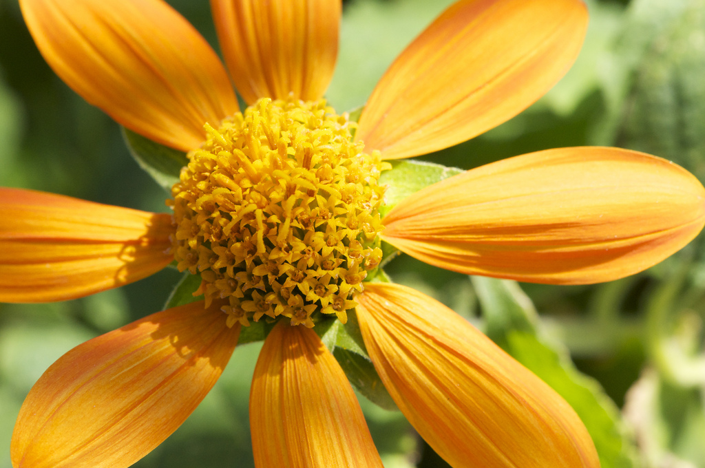 Flower, NY Botanical Gardens.