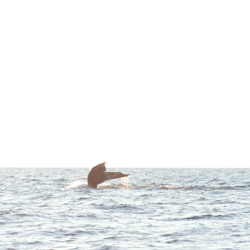 LT-whales.jpg