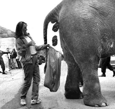 pooping elephant.jpg