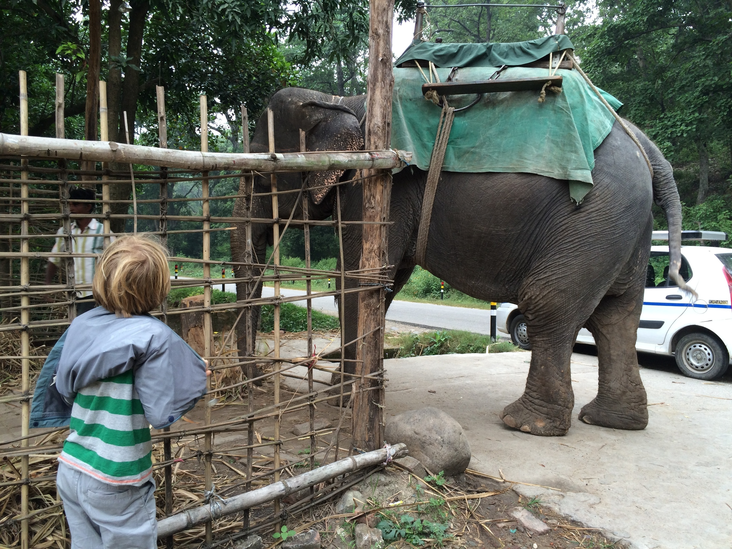 Elliot meets Kalina, a 40-year-old domesticated elephant