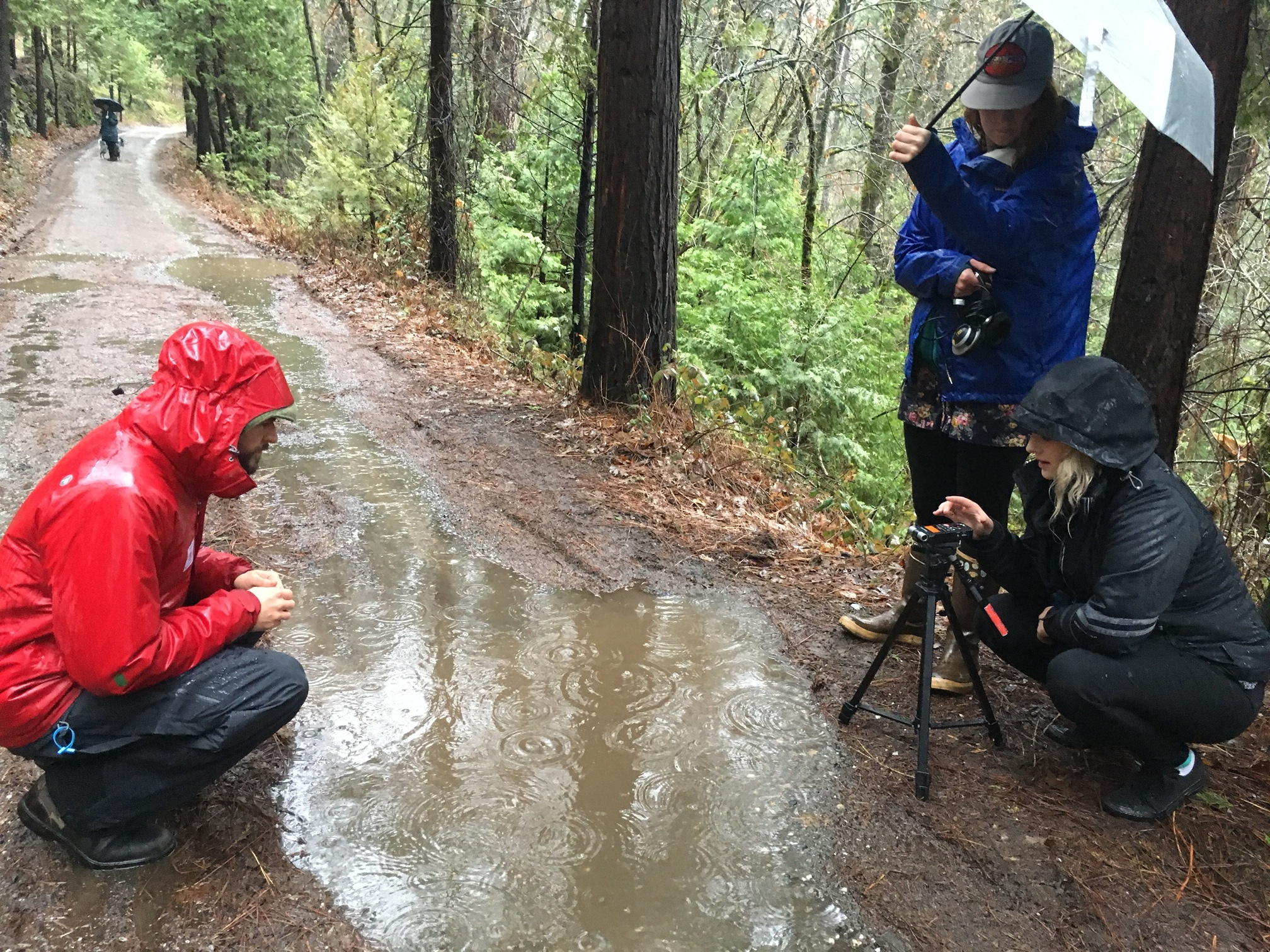 Recording the sound of raindrops on puddles