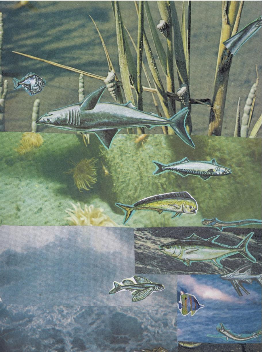 fishes:sharks.jpg