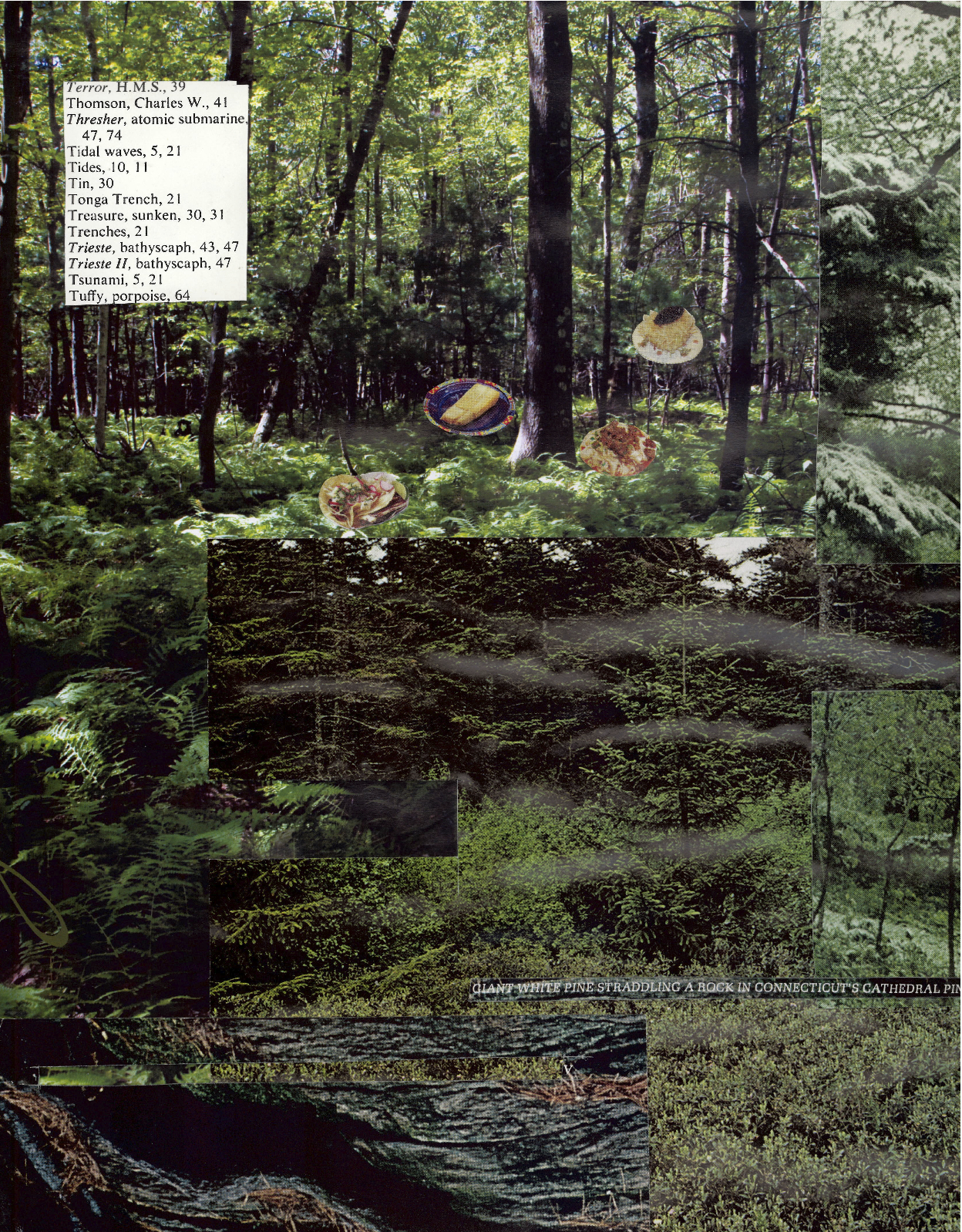 food in forest.jpg