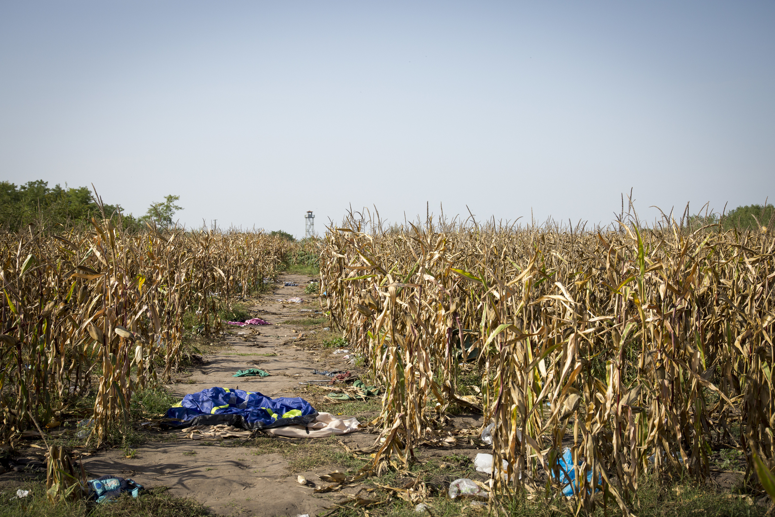 Through this cornfield many fled from the police. Now it is just a tent, trash and shoe prints left.
