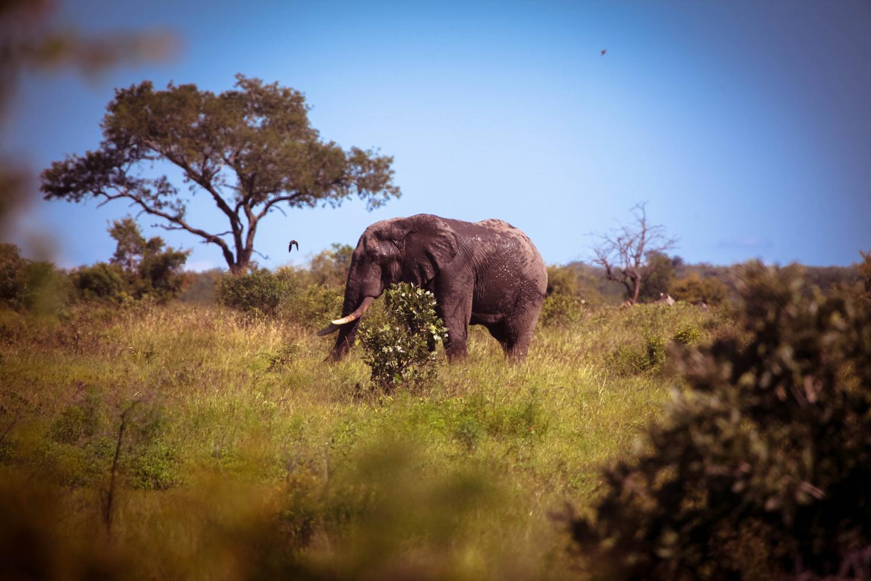 safari010.jpg