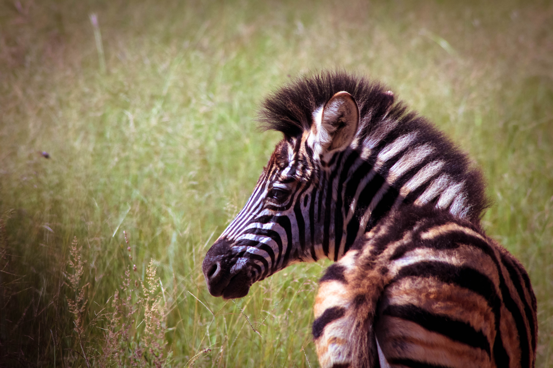 safari029.jpg