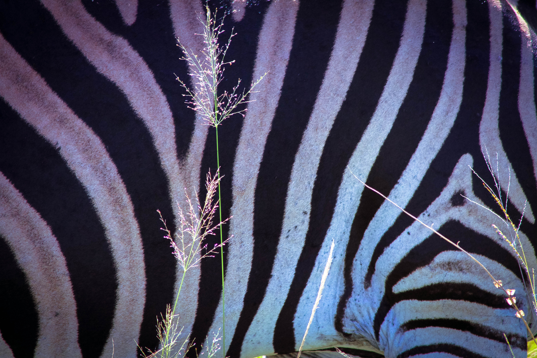 safari031.jpg