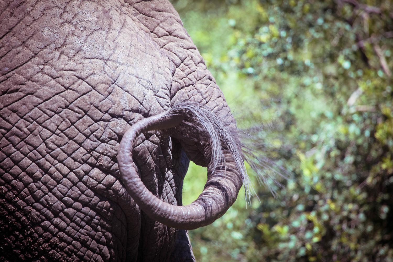 safari044.jpg