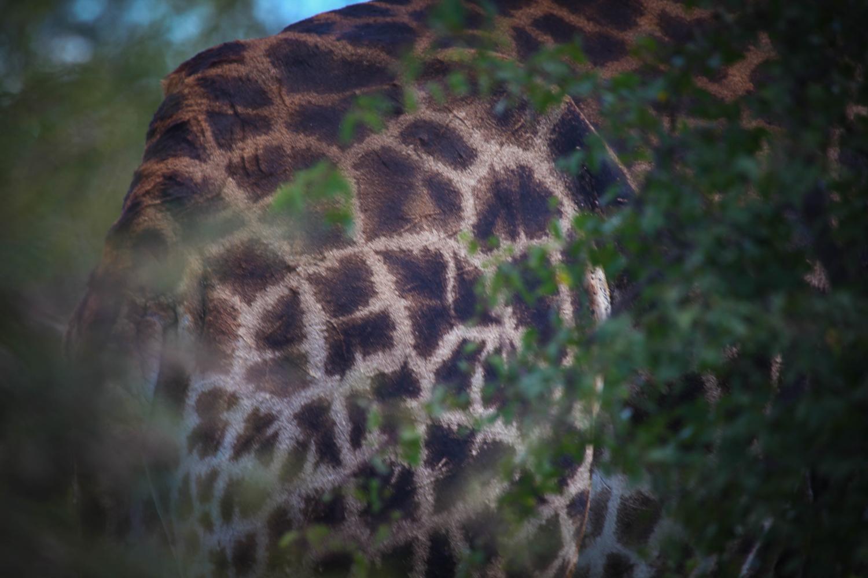 safari050.jpg