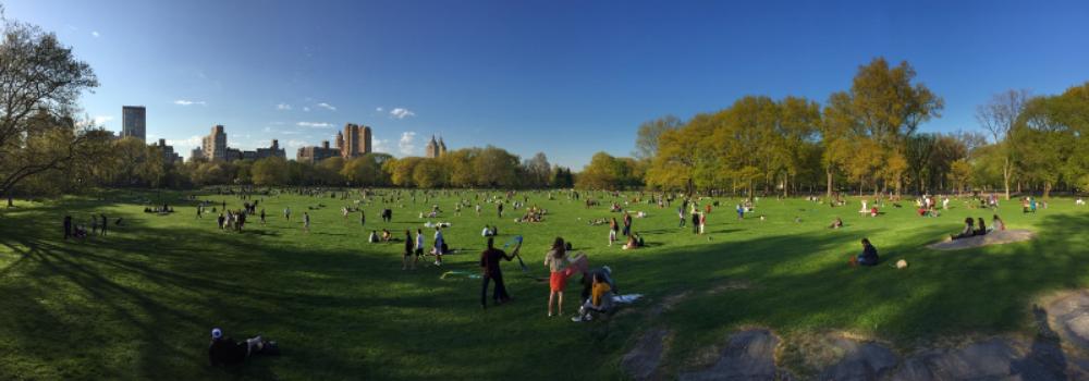 Central Park Sheep's Bay _ Jonathan Heisler