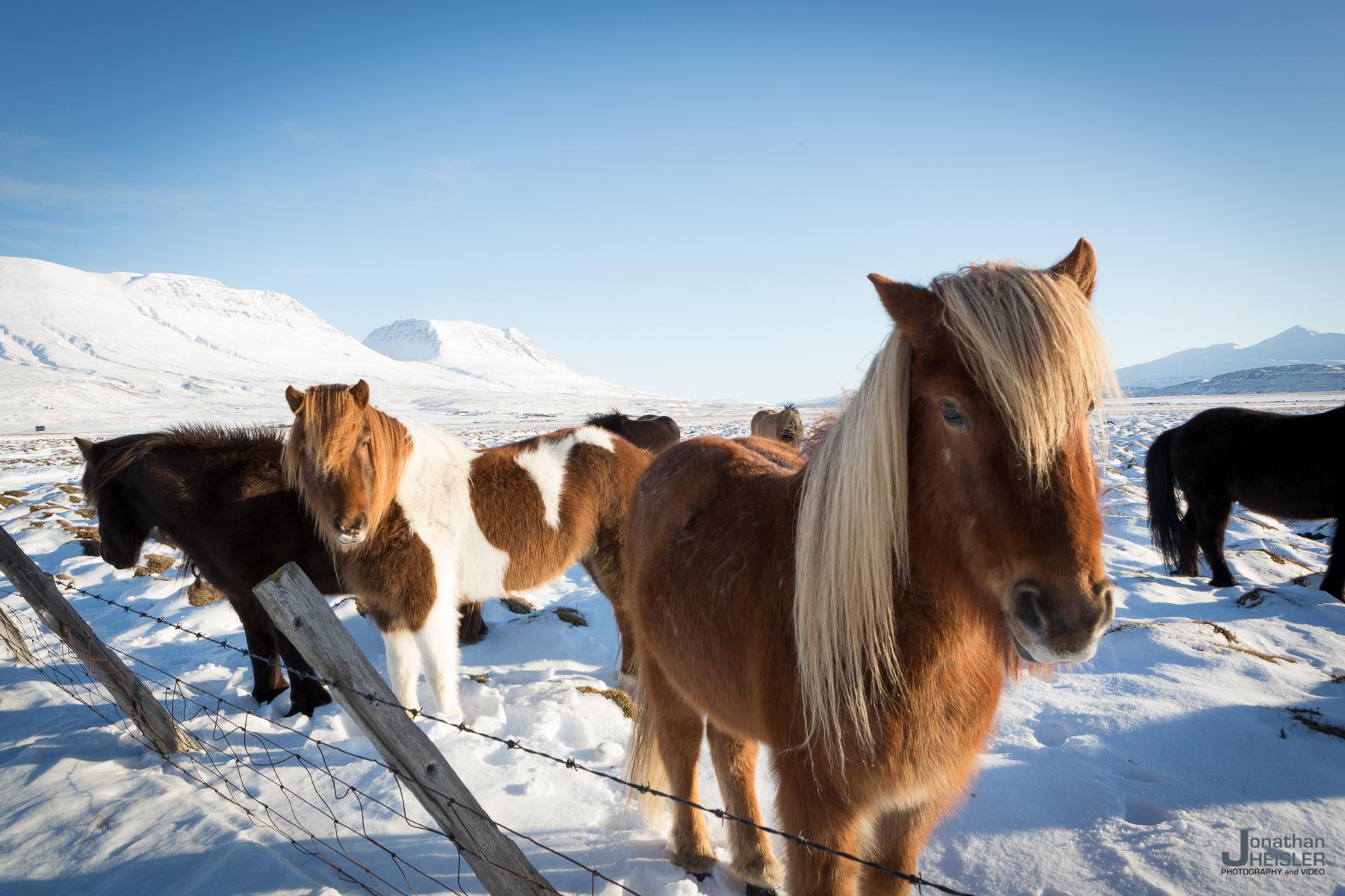 Iceland Winter Photos_  Jonathan Heisler __  02292016 _ 056.jpg