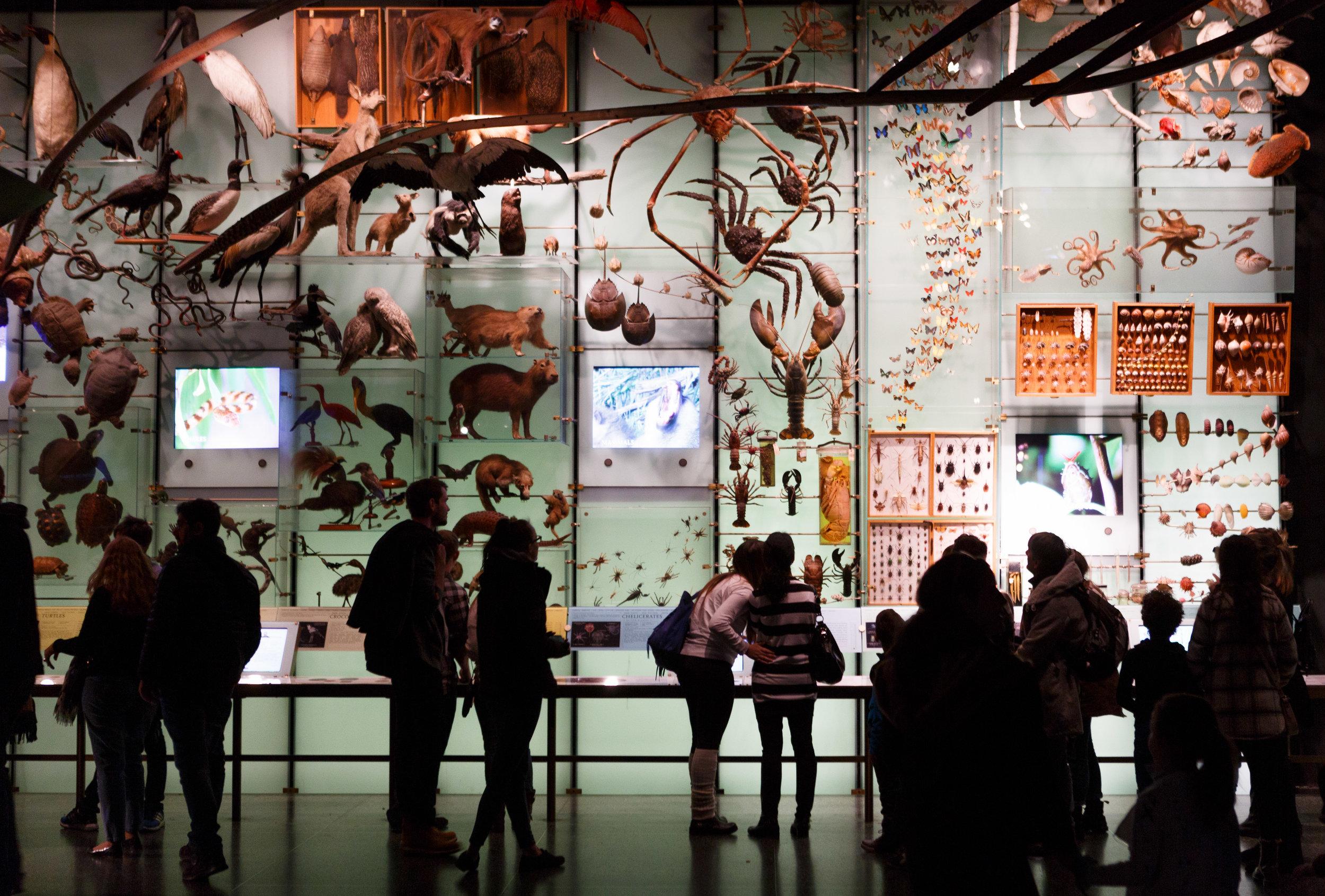1 _ Museum of Natural History NYC.jpg