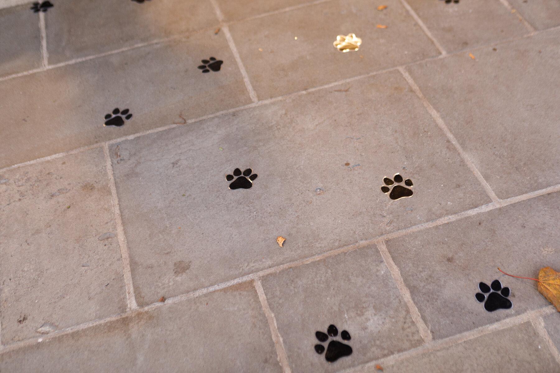 Americas VetDogs _ Dogs On The Catwalk _ Jonathan Heisler _ 10102019 _0003.jpg
