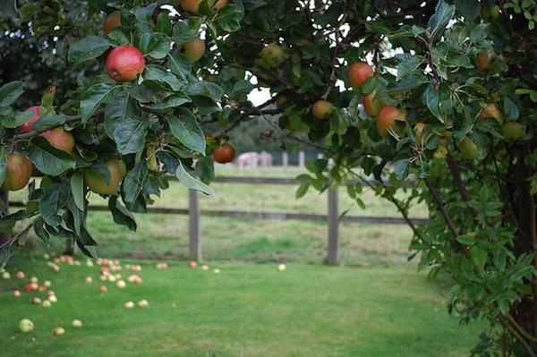 fall-apples-beauty-nutrition.jpg