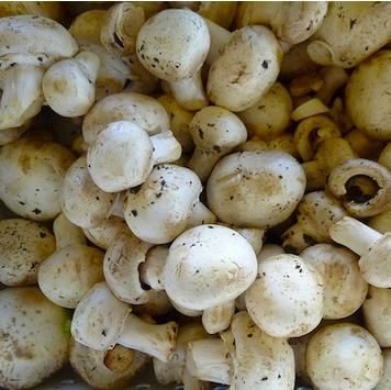 Garlic Mushrooms with Sage Polenta
